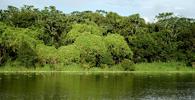PGR questiona novo Código Florestal no STF
